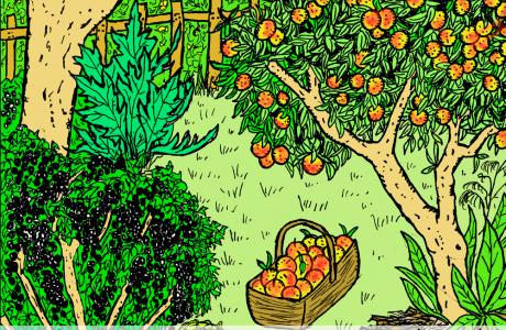 Orchard_0